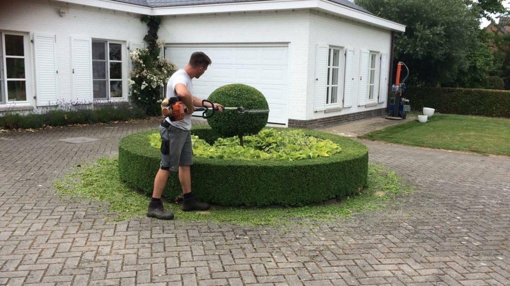Snoeien van hagen - Tuinen Vanautgaerden